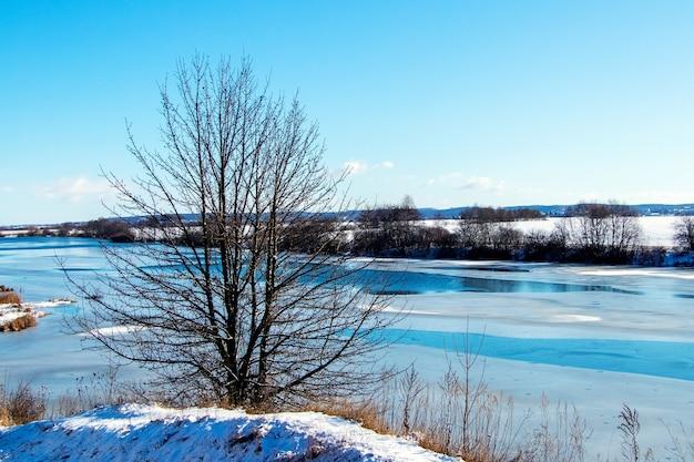 Zimowy krajobraz z drzewem nad brzegiem rzeki przy słonecznej pogodzie