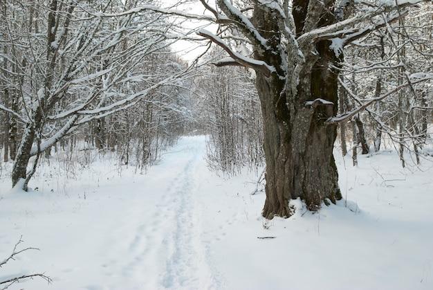 Zimowy krajobraz z lodowymi drzewami.