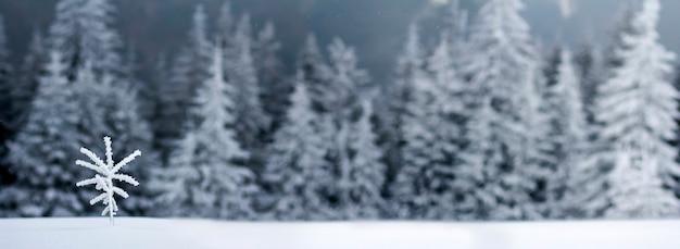 Zimowy krajobraz z małą sosną pokrytą śniegiem