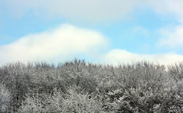 Zimowy krajobraz z ośnieżonych drzew wierzchołków i błękitne niebo