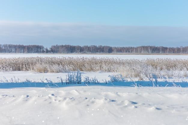 Zimowy krajobraz z ośnieżonym polem i czystą błękitną trawą pokrytą mrozem białym śniegiem