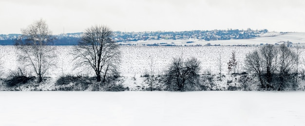 Zimowy krajobraz z ośnieżonym polem i rzeką i drzewami nad rzeką, zimowy dzień, panorama