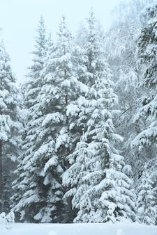 Zimowy krajobraz z ośnieżonymi drzewami (austria, tyrol)