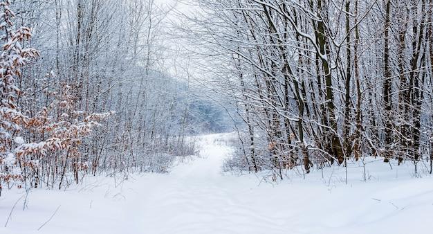 Zimowy krajobraz z ośnieżonymi drzewami i drogą w lesie
