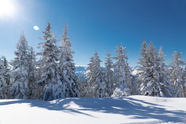 Zimowy krajobraz z ośnieżonymi drzewami i zimowymi górami, alpy góry