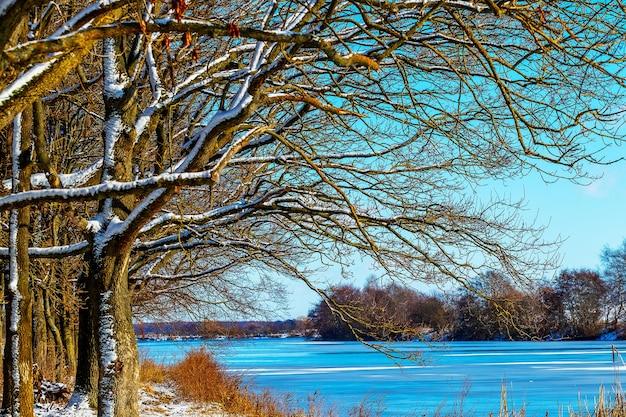 Zimowy krajobraz z ośnieżonymi drzewami nad rzeką w słoneczny dzień