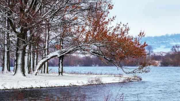 Zimowy krajobraz z ośnieżonymi drzewami w pobliżu rzeki
