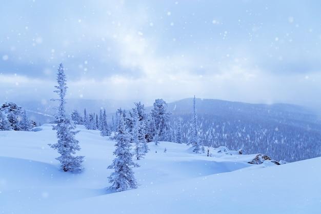 Zimowy Krajobraz Z Padającym śniegiem Premium Zdjęcia