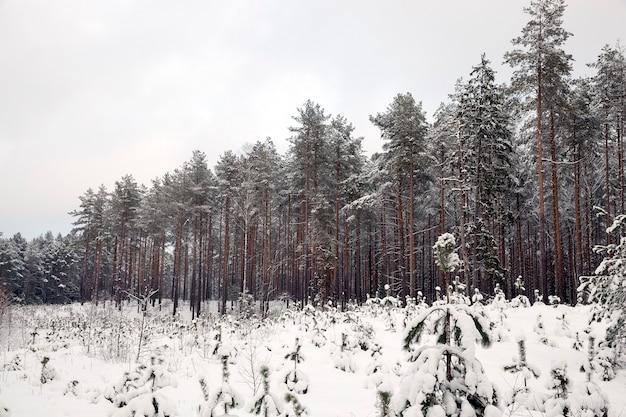Zimowy krajobraz z różnymi rodzajami drzew