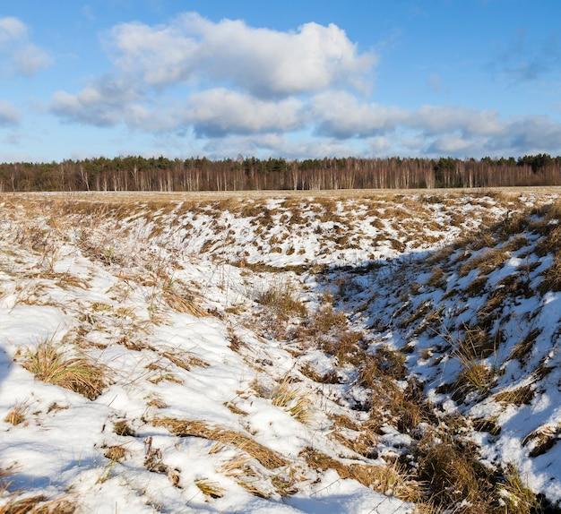 Zimowy krajobraz z suchą trawą żółtego koloru, pokrytą opadającym śniegiem. w tle las liściasty i błękitne niebo