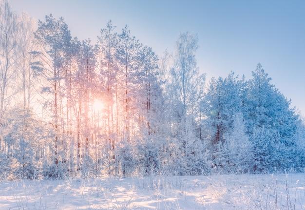 Zimowy krajobraz z widokiem drzew w śniegu ze słońcem