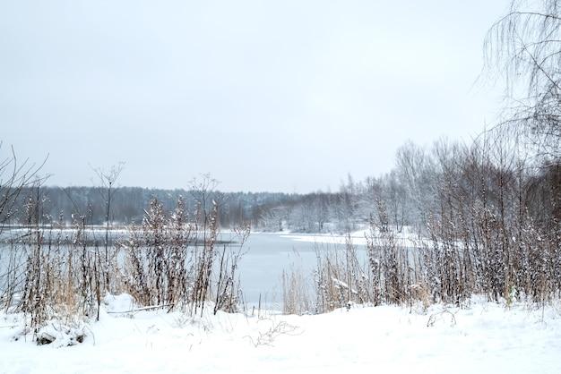 Zimowy krajobraz z zamarzniętym jeziorem i suchymi pokrytymi śniegiem roślinami i bezlistnymi drzewami na horyzoncie