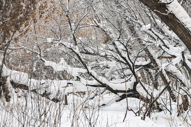 Zimowy krajobraz ze śniegiem i drzewami