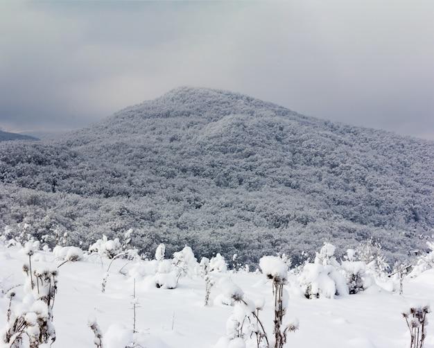 Zimowy krajobraz ze śniegiem pokryte lasem wzgórza