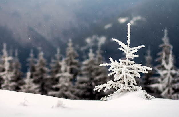 Zimowy krajobraz ze śniegiem pokryte małą sosną