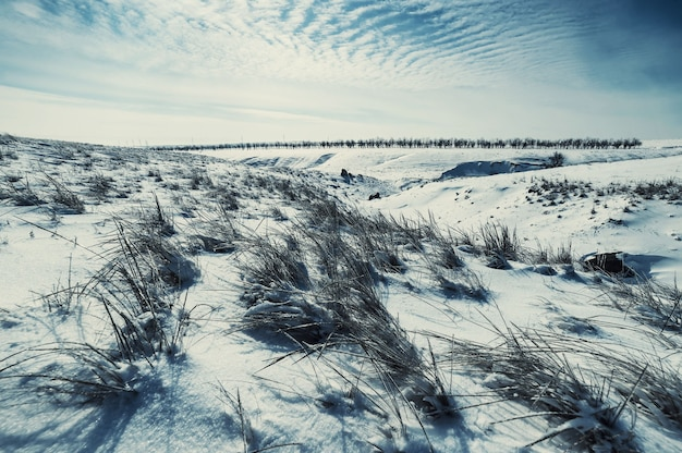Zimowy krajobraz ze stepem przykryty śniegiem. lodowata trawa na zaśnieżonej prerii. stylizacja vintage, filtr filmowy retro