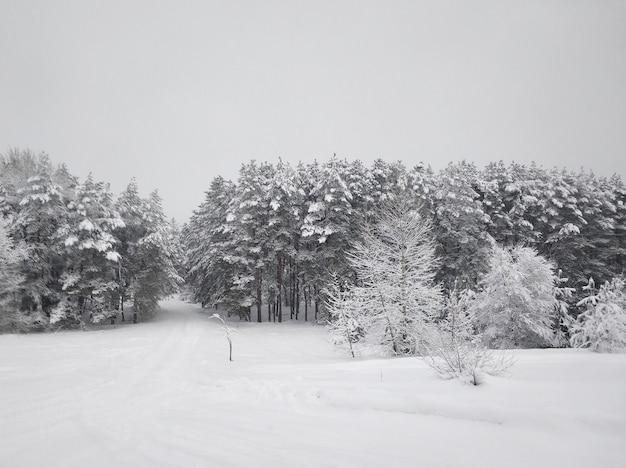 Zimowy krajobraz. zimowa drabina pokryta białym śniegiem. drzewa na śniegu.