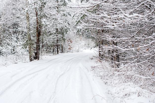Zimowy krajobraz - zimowy las czarów z drzewami liściastymi, pokrytymi śniegiem. zimowa droga w lesie
