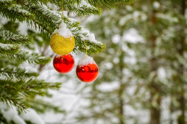 Zimowy las iglasty. na gałęzi wiszą dwie czerwone bombki choinkowe i jedna złota, posypana śniegiem