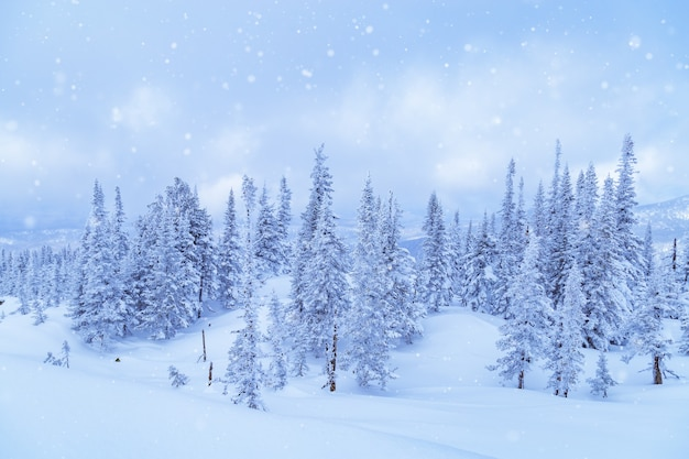 Zimowy las iglasty na szczycie góry utua śnieg padający na błękitne niebo