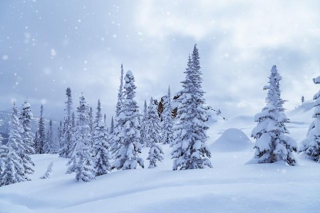 Zimowy las iglasty