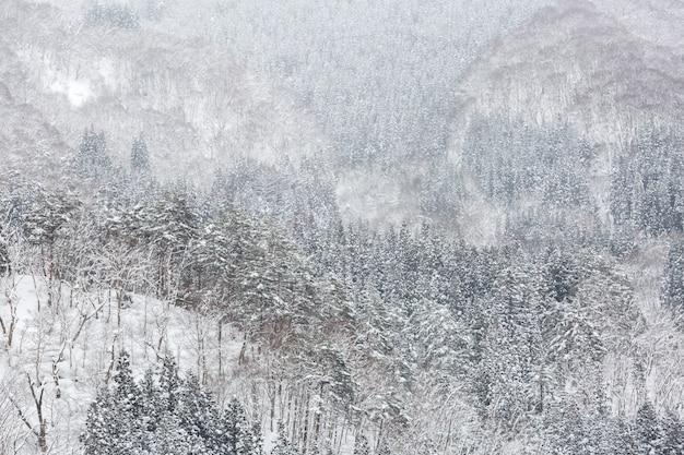 Zimowy las krajobrazowy