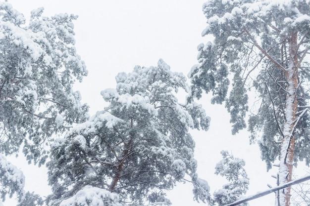 Zimowy las. las po obfitych opadach śniegu. zimowy krajobraz