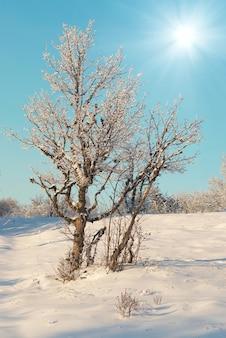 Zimowy las lodowaty w słoneczny dzień