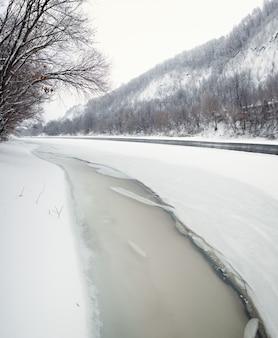 Zimowy las nad brzegiem donu