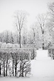 Zimowy las pełne śniegu w tle