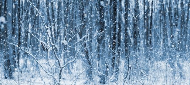 Zimowy las podczas opadów śniegu. ośnieżone drzewa w zimowym lesie, boże narodzenie w tle