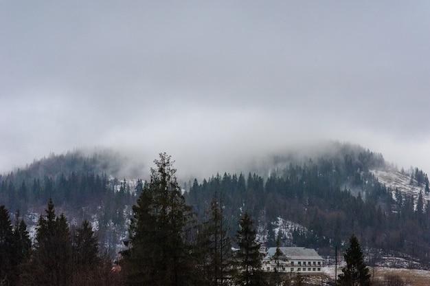 Zimowy las pokryte śniegiem. mglista pogoda. zła widoczność.
