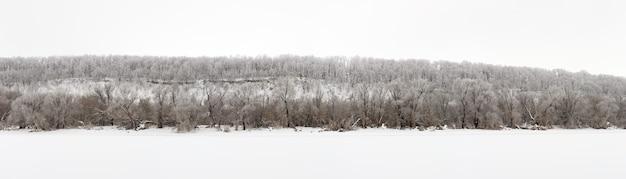 Zimowy las pokryty szronem w środku rosji.