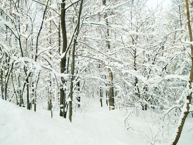 Zimowy las. ścieżka przez zaśnieżone lasy