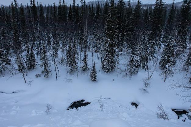 Zimowy las spowity śniegiem. nocny krajobraz