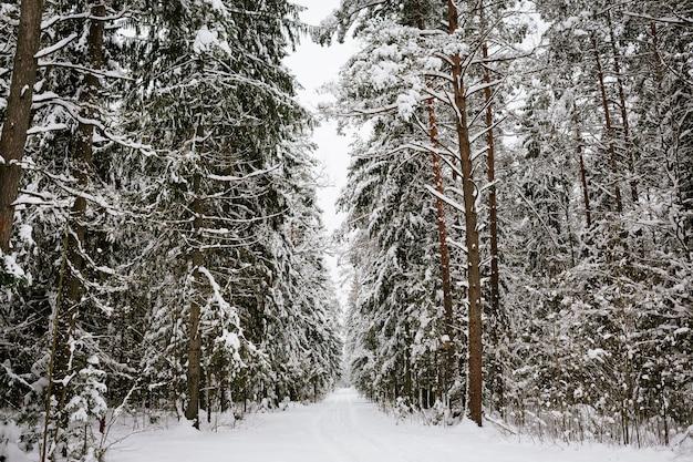 Zimowy las tło