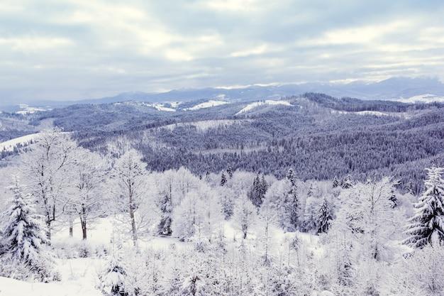 Zimowy las w górach
