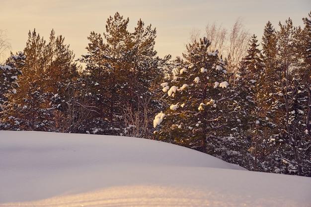 Zimowy las w mroźny słoneczny dzień z błękitnym niebem