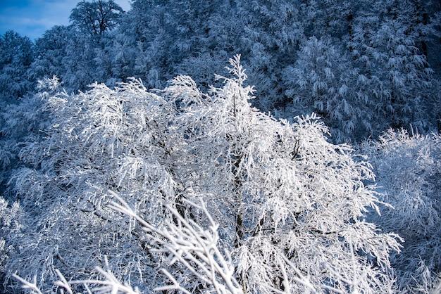 Zimowy las w śniegu śnieg krajobraz ośnieżone góry zima w lesie