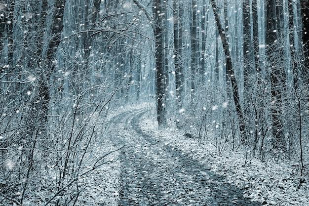 Zimowy las z drogą podczas obfitych opadów śniegu