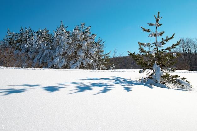 Zimowy las z głębokim białym śniegiem na drzewach