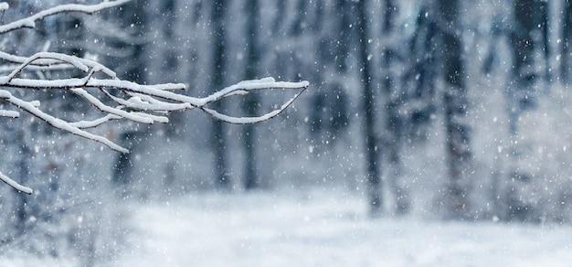 Zimowy las z ośnieżoną gałęzią drzewa na rozmytym tle podczas opadów śniegu. w lesie pada śnieg