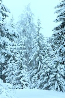 Zimowy las z ośnieżonymi jodłami (austria).