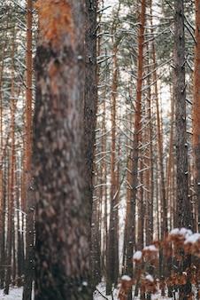 Zimowy las ze śniegiem na drzewach i podłodze