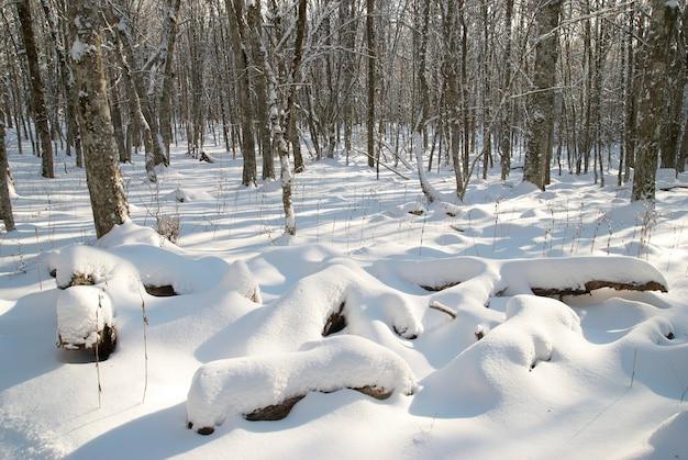 Zimowy lodowaty krajobraz z jasnym, lśniącym dniem
