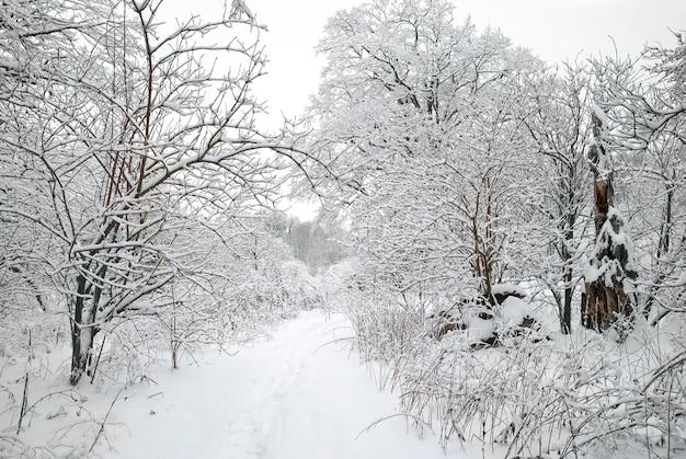 Zimowy lodowaty las z pięknymi drzewami