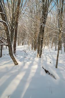 Zimowy lodowaty las