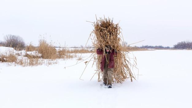 Zimowy. mężczyzna idzie przez śnieg, niosąc na plecach ogromną paczkę suchych trzcin