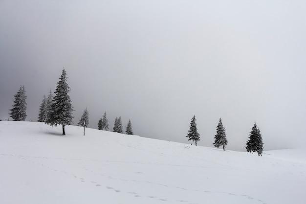 Zimowy mglisty krajobraz z sosny pokryte śniegiem