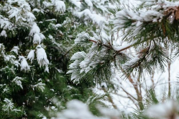 Zimowy mróz. przypływ, zimą małe białe kryształy lodu tworzą się na ziemi lub innych powierzchniach, gdy temperatura spada poniżej zera.